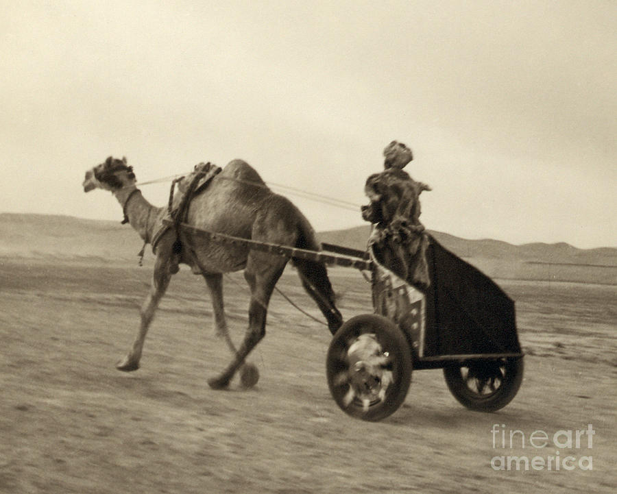 1938 Photograph - Syria: Camel Race, C1938 by Granger