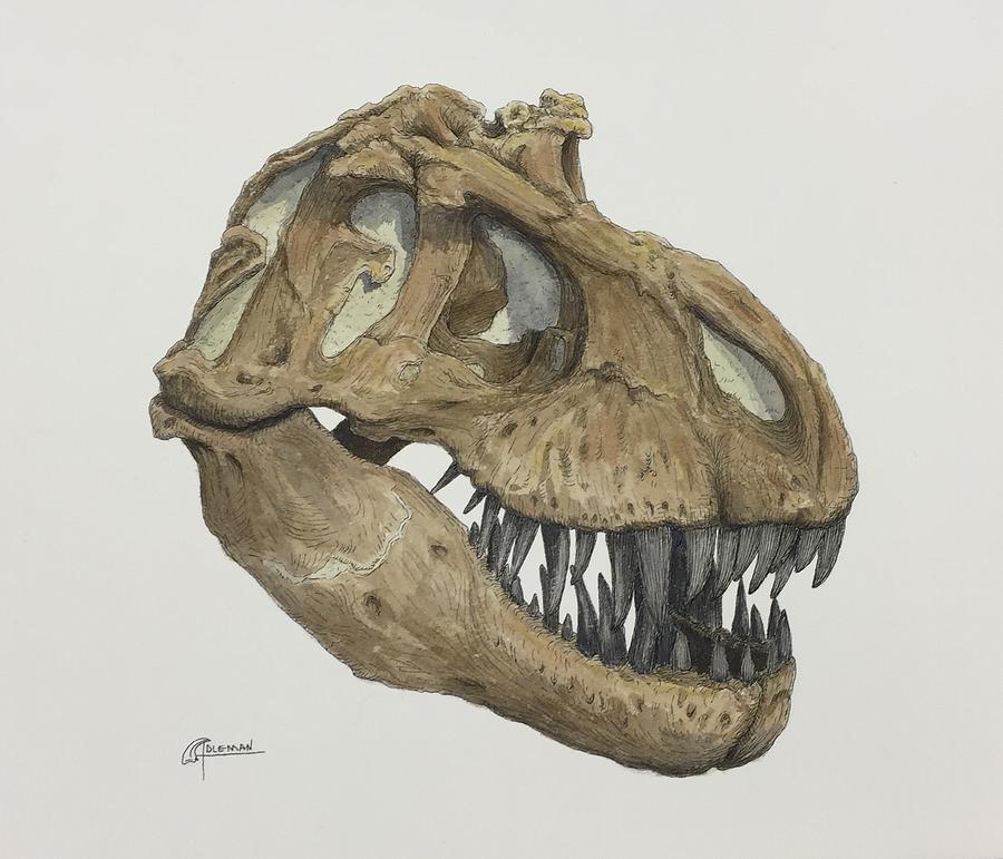 T. rex Skull 2 by Rick Adleman