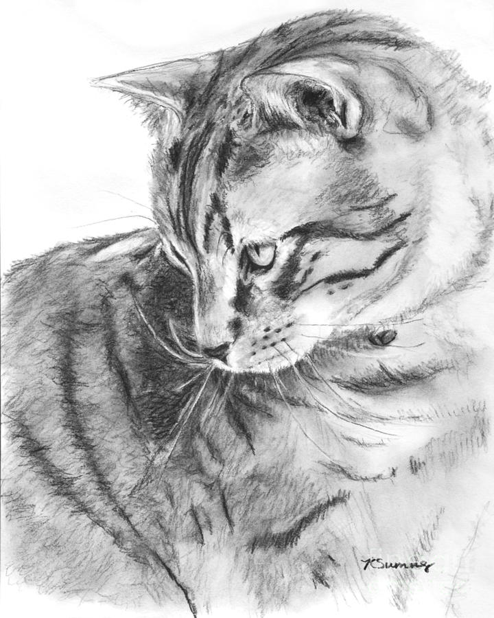 Tabby Drawing - Tabby Cat In Profile Drawing by Kate Sumners