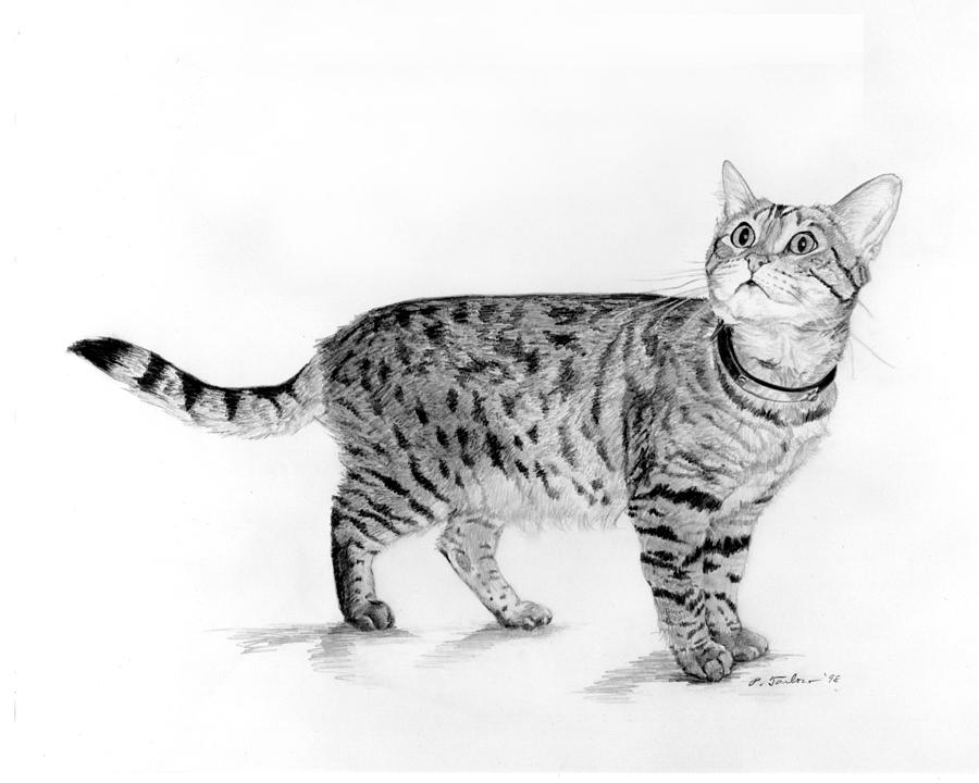 Outline Picture Of A Tabby Cat