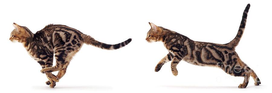 Risultato immagini per cat running