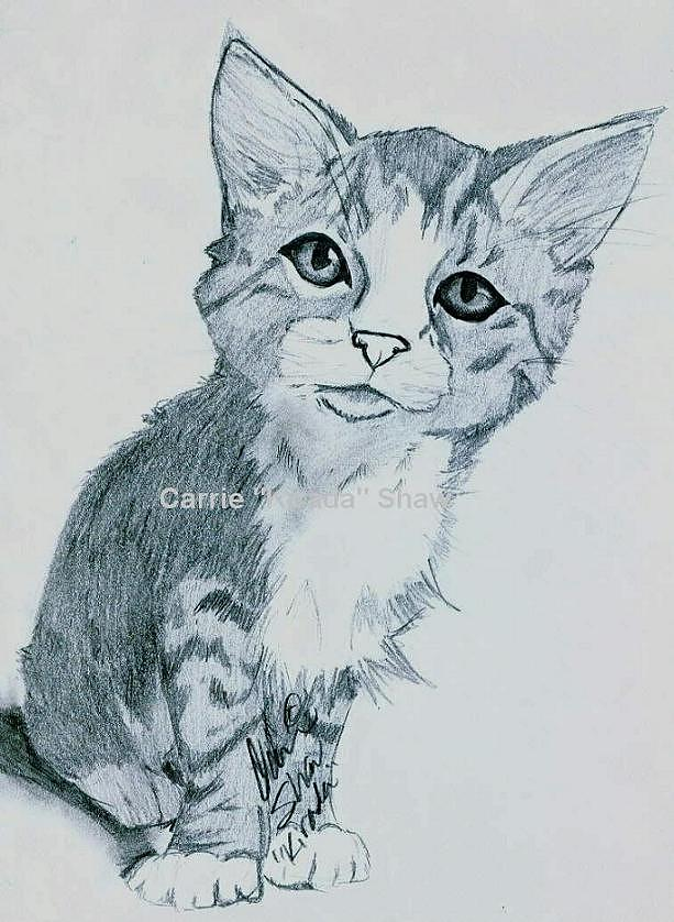 Kitten Drawing - Tabby Kitten by Carrie Shaw