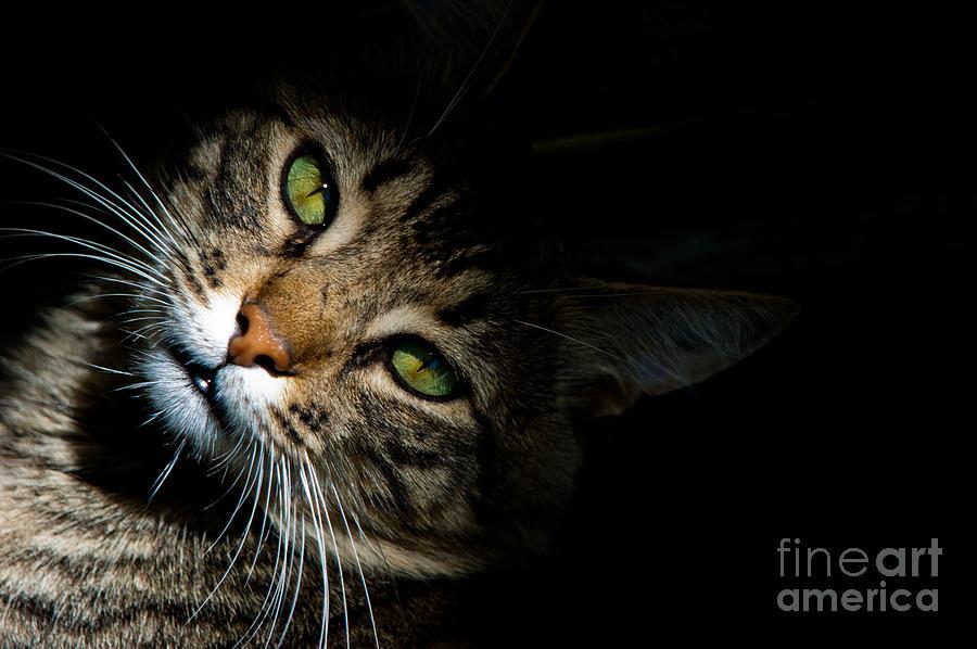 Tabby Photograph