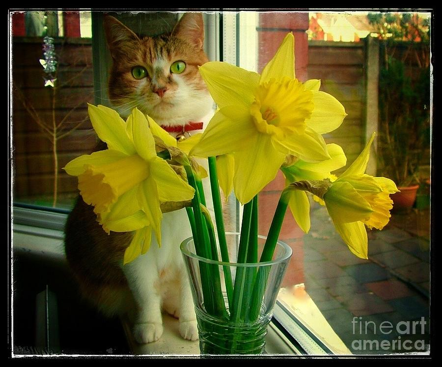 Tabitha With The Daffodils Photograph