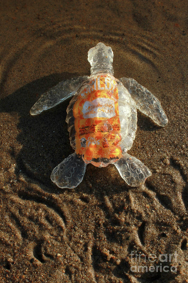 Taco Sauce Baby Sea Turtle From The Feral Plastic Series By Adam Sculpture