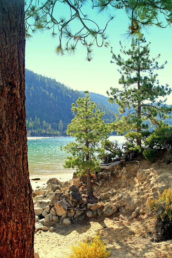 Pines Photograph - Tahoe Pines by Lynn Bawden