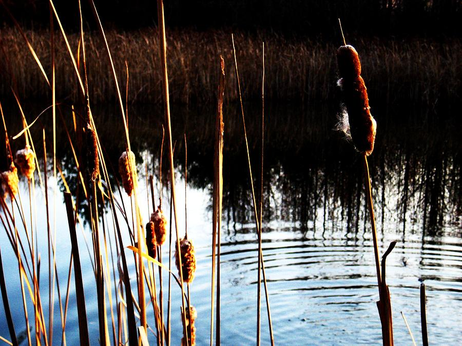 Lake Photograph - Tails Of Silver And Gold by Toni Jackson