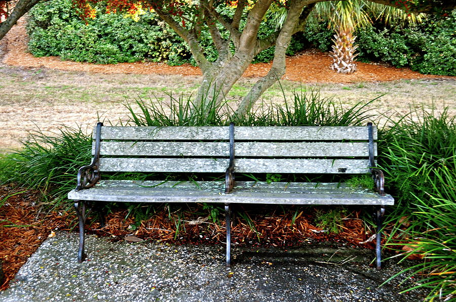 Bench Photograph - Take A Seat Lovey by Laura Ogrodnik