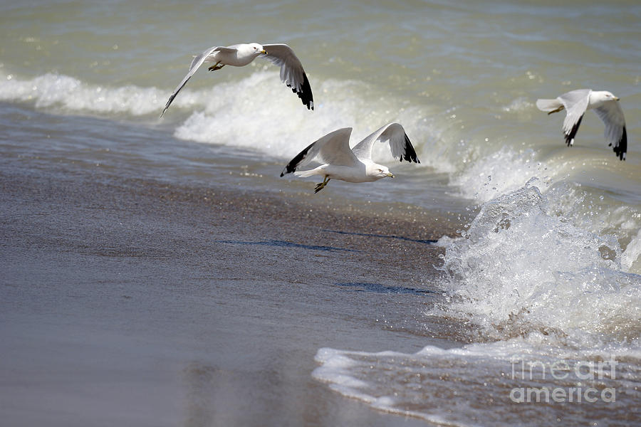Seagull Photograph - Take Flight by Jeannie Burleson