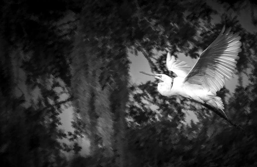 Cove Photograph - Take Flight by Marvin Spates