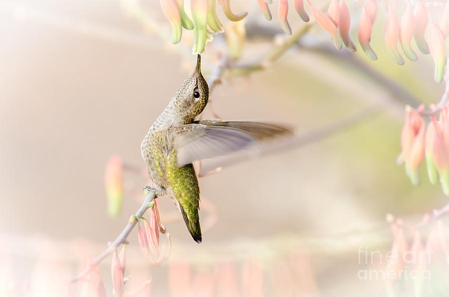Bird Photograph - Take It Easy by Emily Bristor