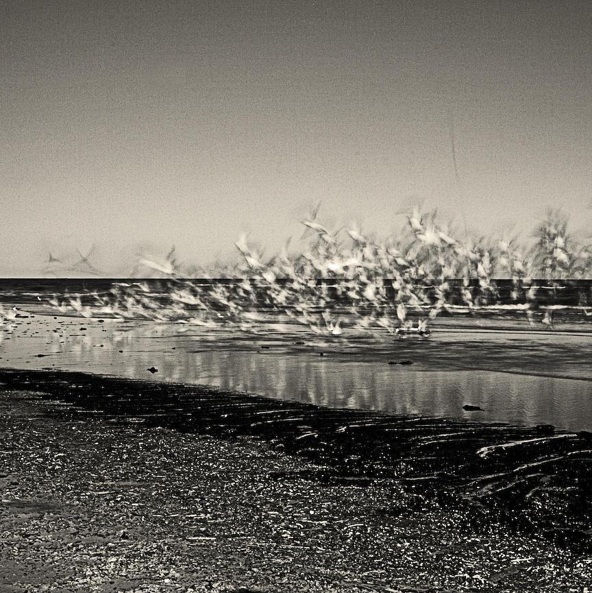 Take-off Photograph by Michael Mancini