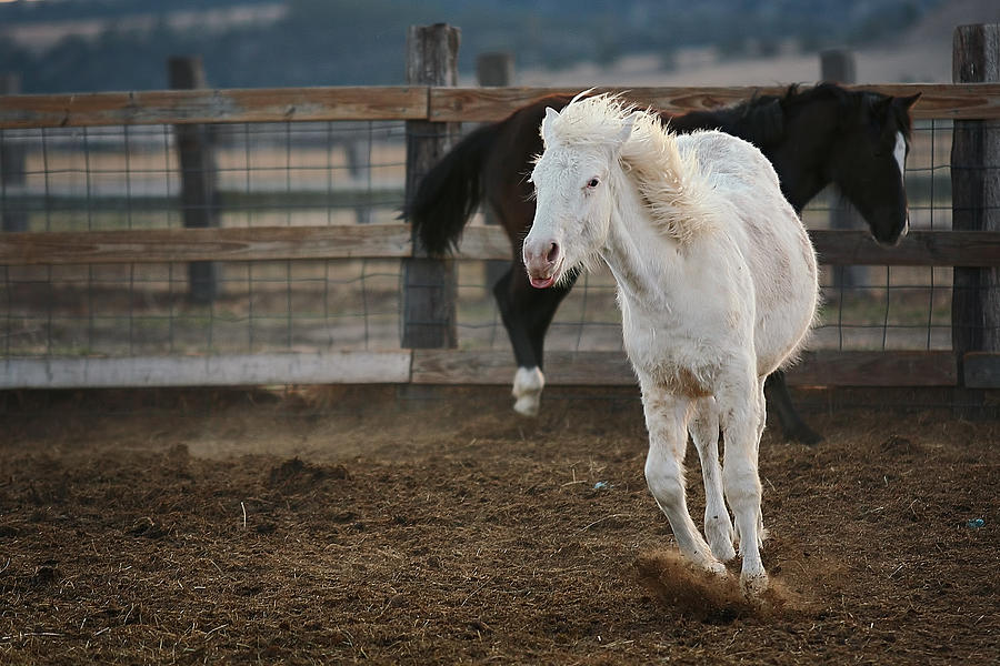 Equine Photograph - Take That by Deborah Johnson