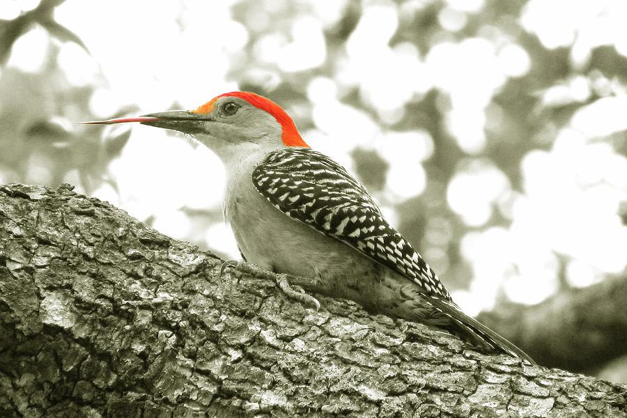 Nature Photograph - Take That by Peg Urban