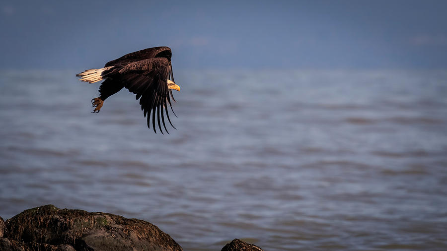 Canada Photograph - Takeoff by Windy Corduroy