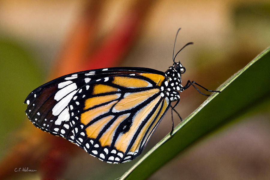 Butterfly Photograph - Taking A Break by Christopher Holmes