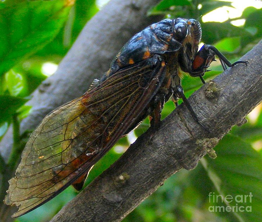 Cicada Photograph - Taking A Rest by Kathy Daxon