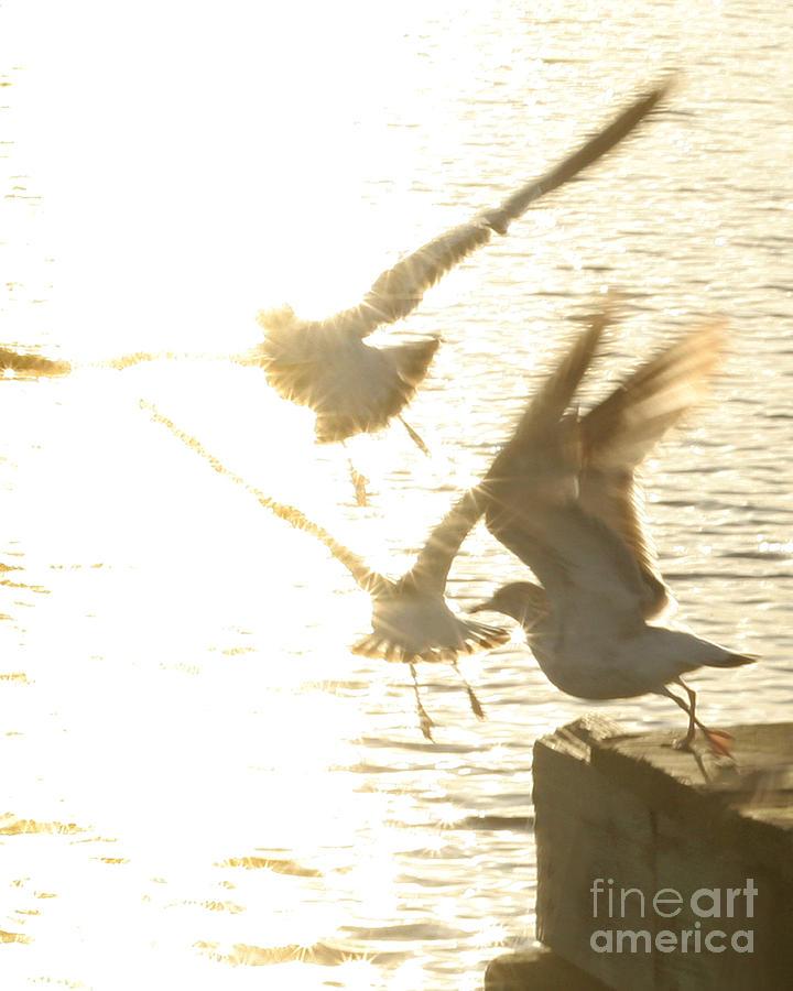 Bird Photograph - Taking Flight by Angie Bechanan