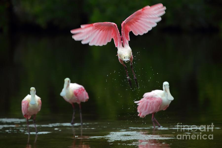 Bird Photograph - Taking flight by Rick Mann