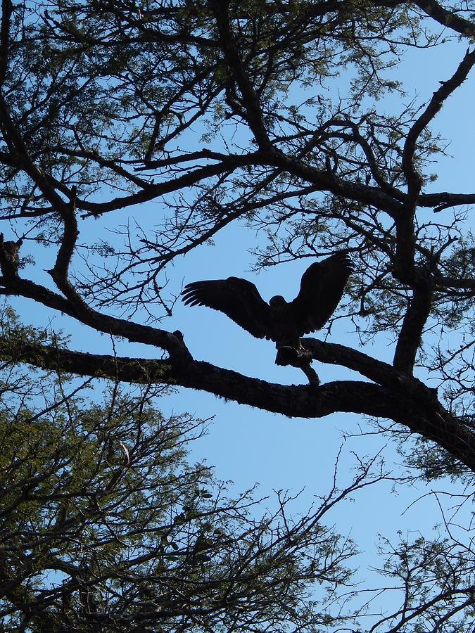 Bird Photograph - Taking Flight South Africa by Patrick Murphy