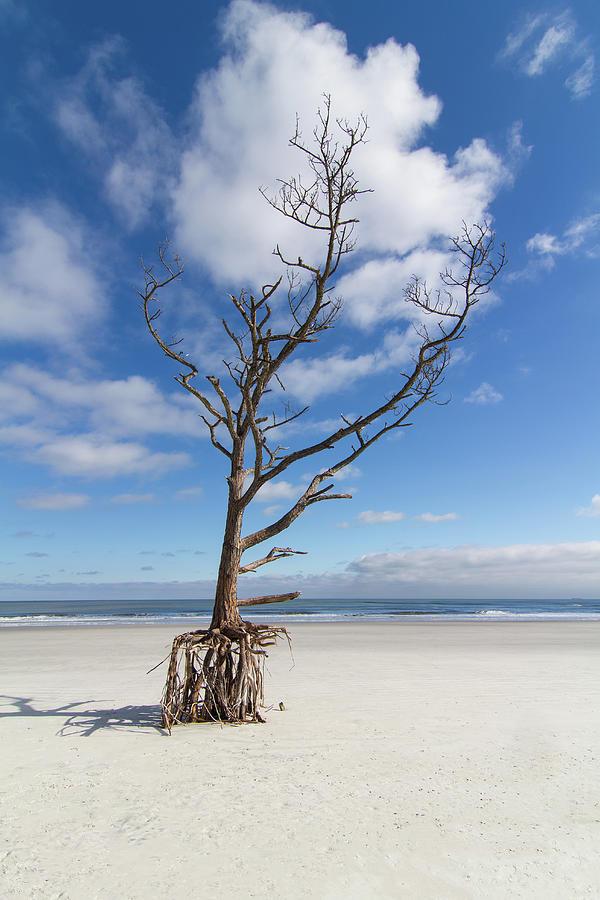 Talbot Stilt Tree #2 Photograph