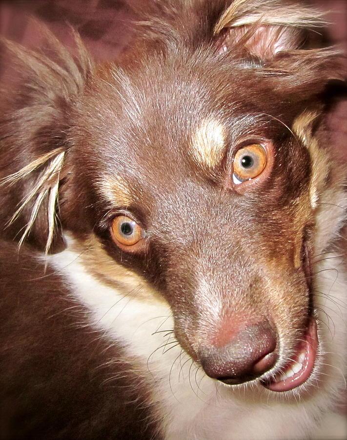 Talking Dog Photograph - Talking Dog by Gwyn Newcombe