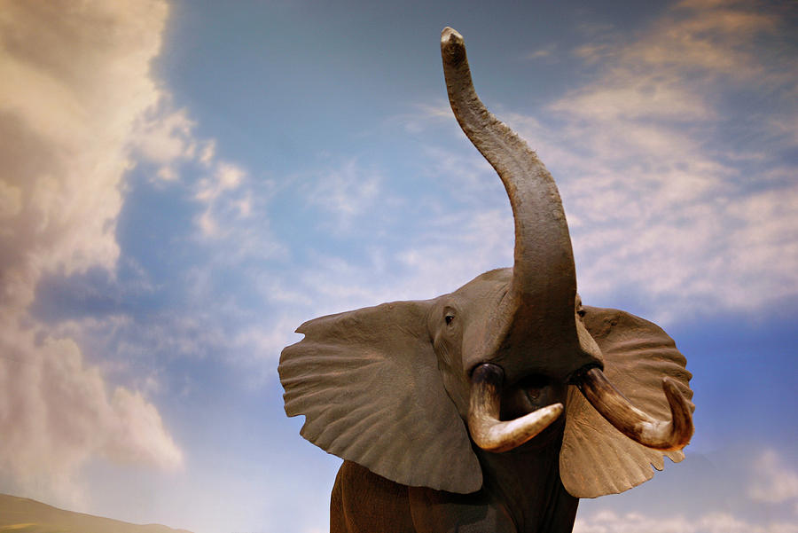 Nature Photograph - Talking Elephant by Marilyn Hunt