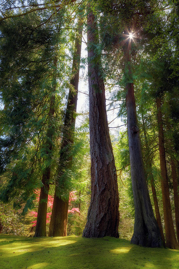 Trees Photograph - Tall and Mighty by David Gn