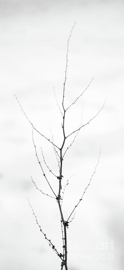 Dry Photograph - Tall by Gabriela Insuratelu