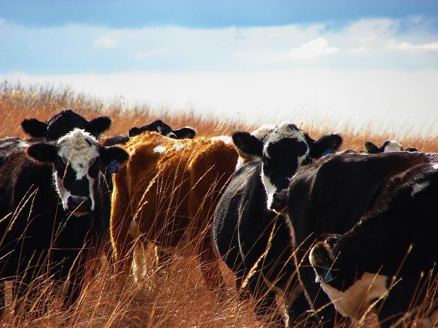 Tall Grass Prairie Photograph