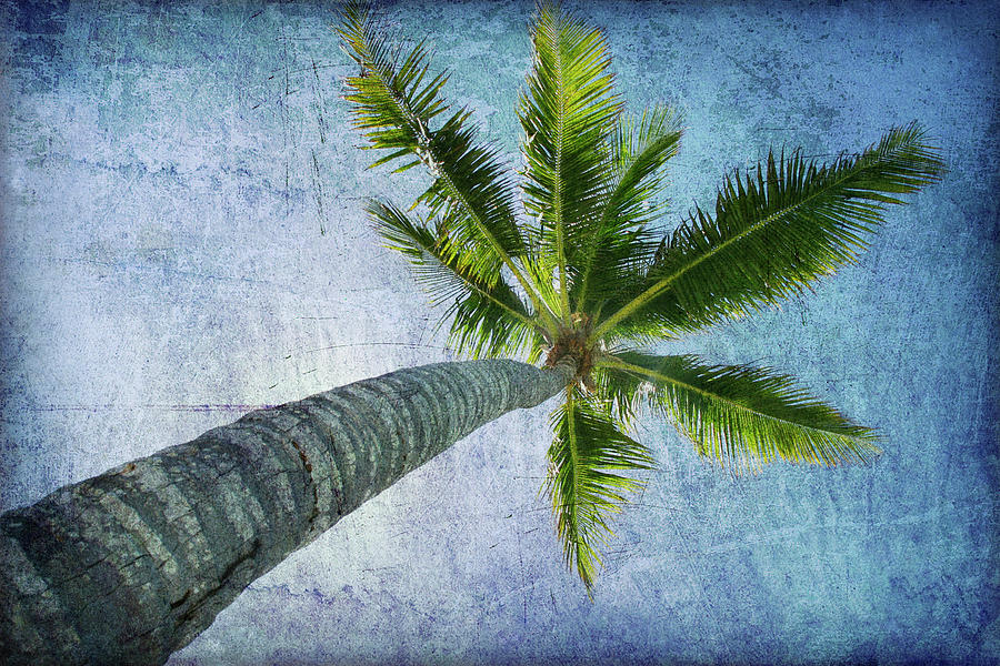 Tall Palm Photograph by Guy Crittenden