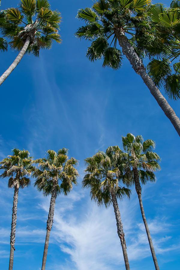 Trees Photograph - Tall Palms Meet The Sky by Robert VanDerWal