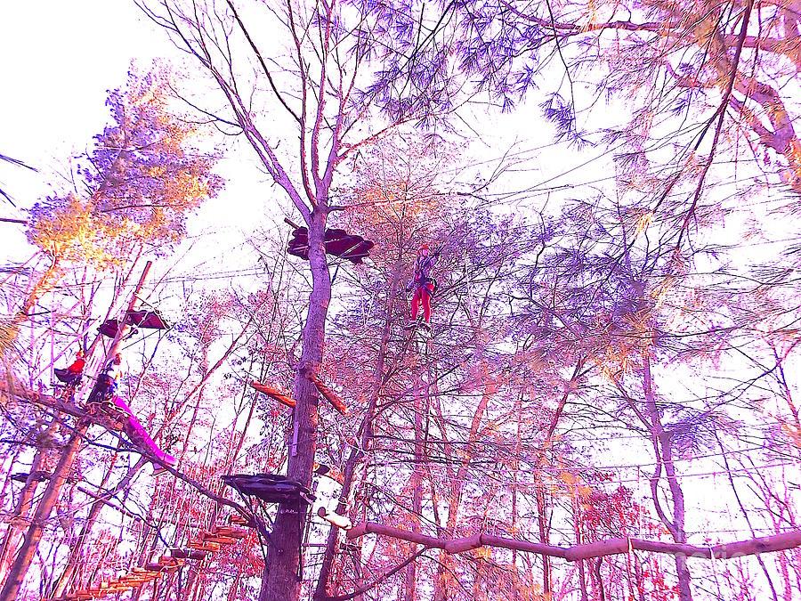 tall trees 4HI-ZIP Photograph