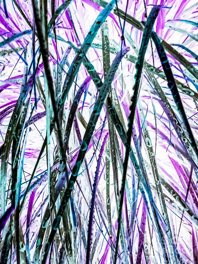 Tall Photograph - Tall Wet Grass by Heather Joyce Morrill