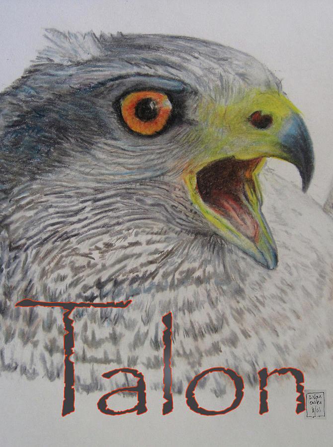 Hawk Drawing - Talon Close Up by Lucien Van Oosten
