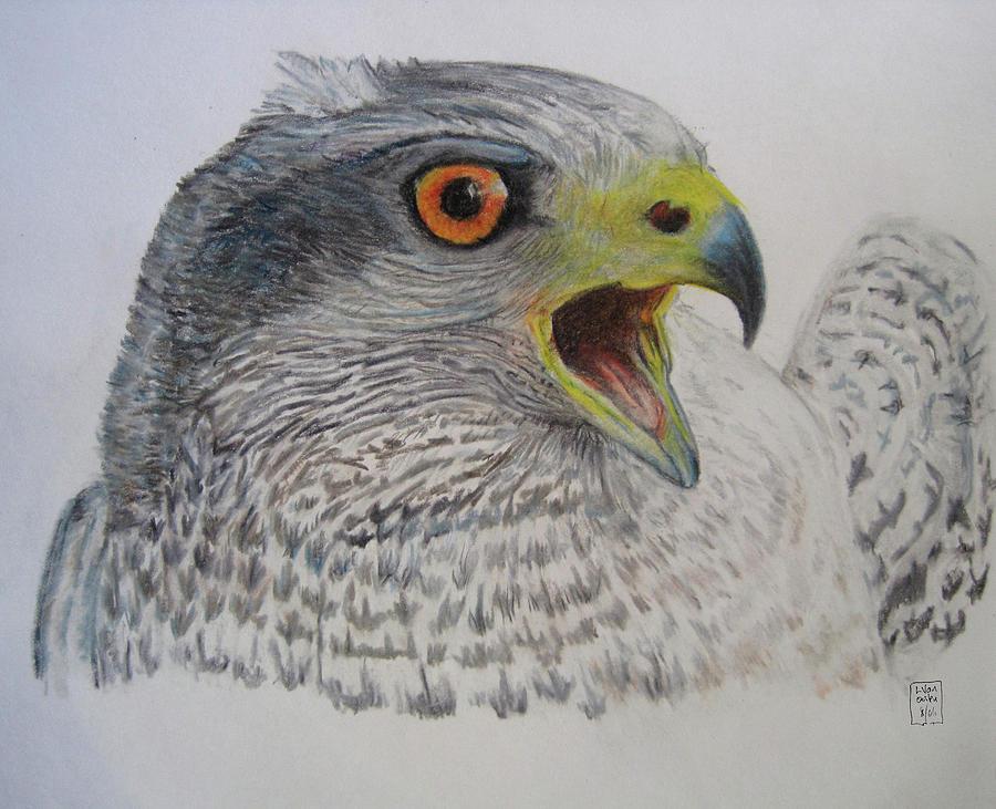 Hawk Drawing - Talon by Lucien Van Oosten