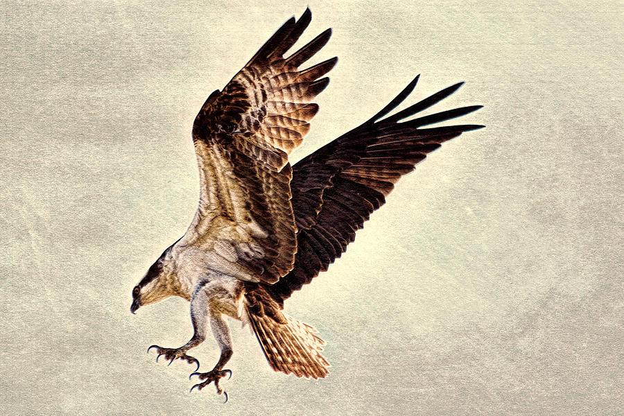Talons First Photograph