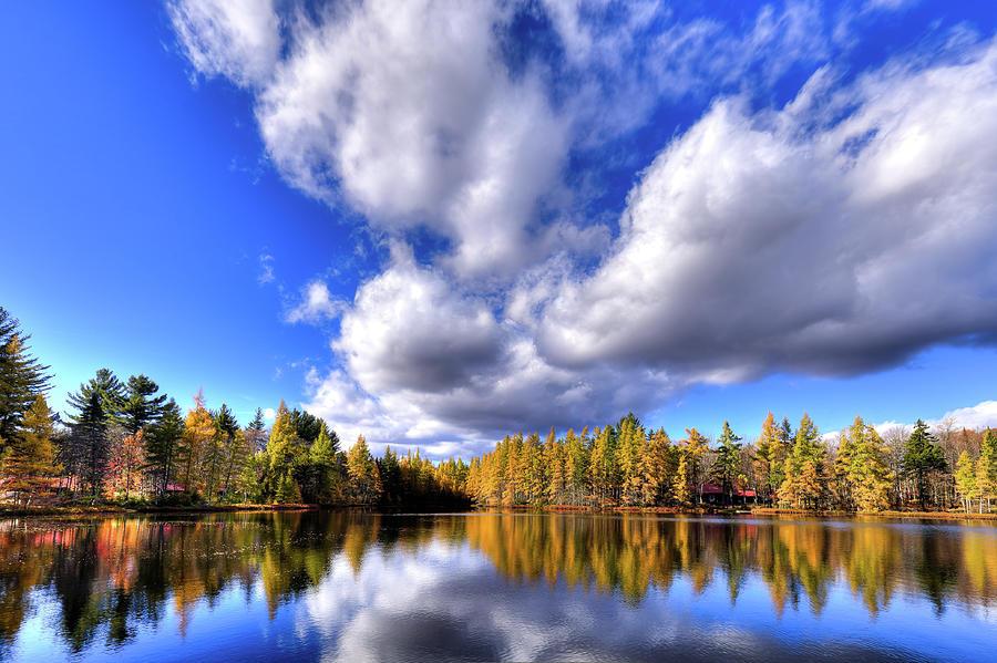 Tamarack Reflections In The Adirondacks Photograph by David Patterson