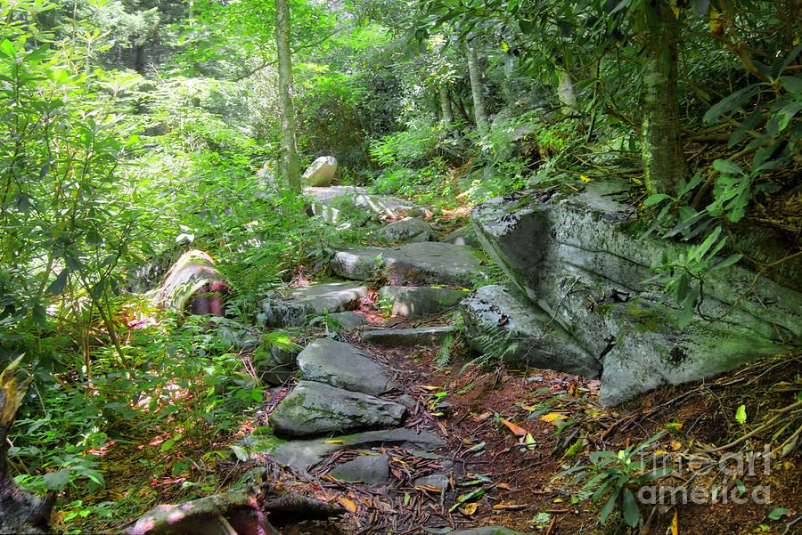 Nature Photograph - Tanawha Trail by James Foshee