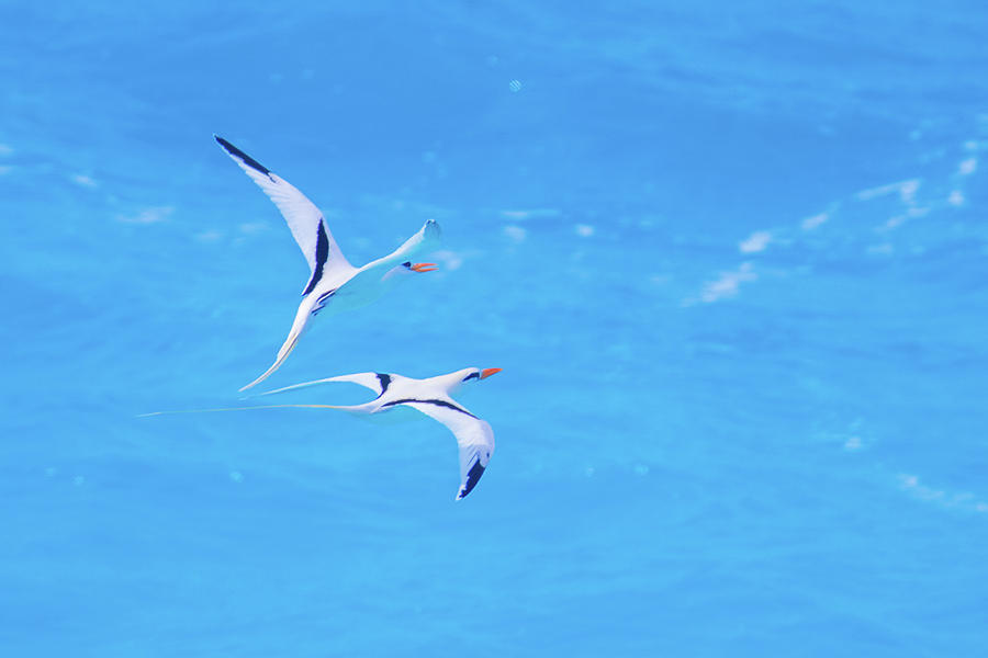Tangential Longtails by Jeff at JSJ Photography