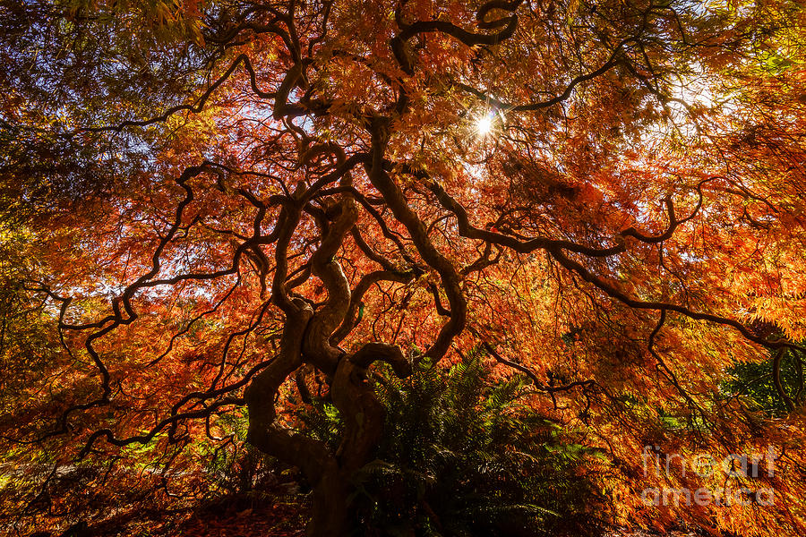 British Columbia Photograph - Tangled by Carrie Cole