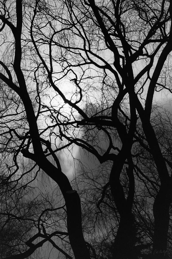 Tree Photograph - Tangled Trees by Phill Doherty