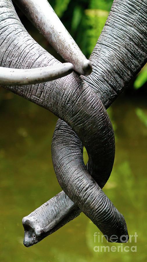 Tangled Trunks by Ray Shiu