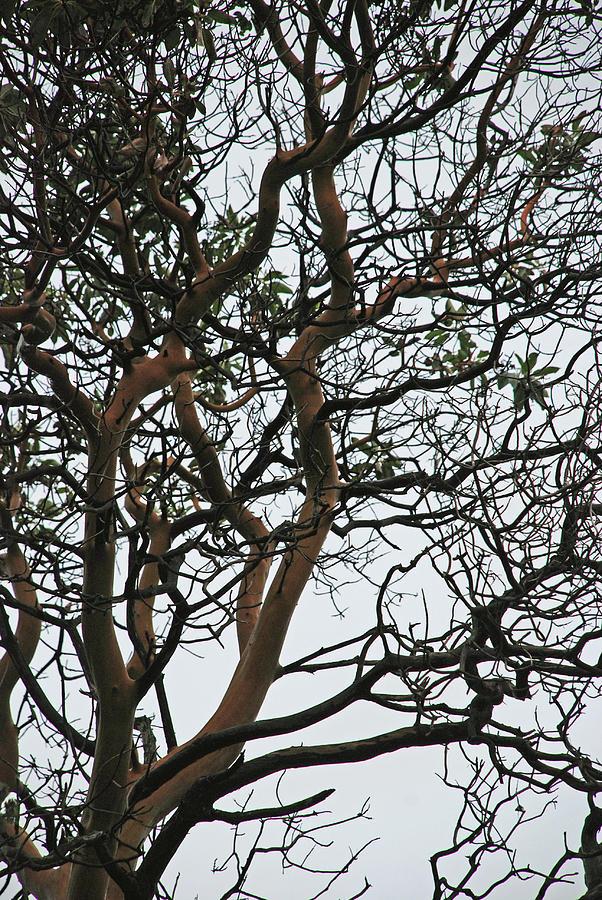 Landscape Photograph - Tangled Web Tree by Carol  Eliassen