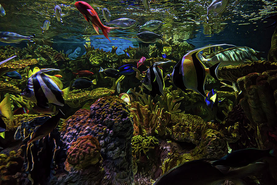 Aquarium Photograph - Tanked 1 by Janet Fikar