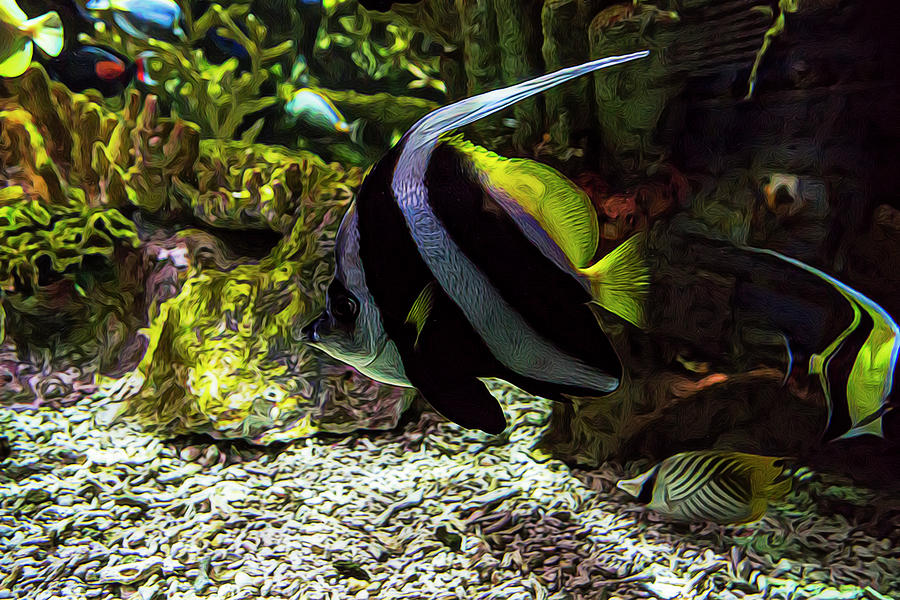 Aquarium Photograph - Tanked 3 by Janet Fikar