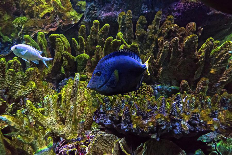 Aquarium Photograph - Tanked 6 by Janet Fikar
