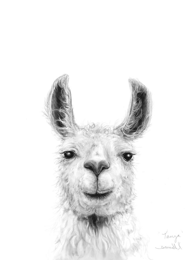 Llamas Drawing - Tanya by K Llamas
