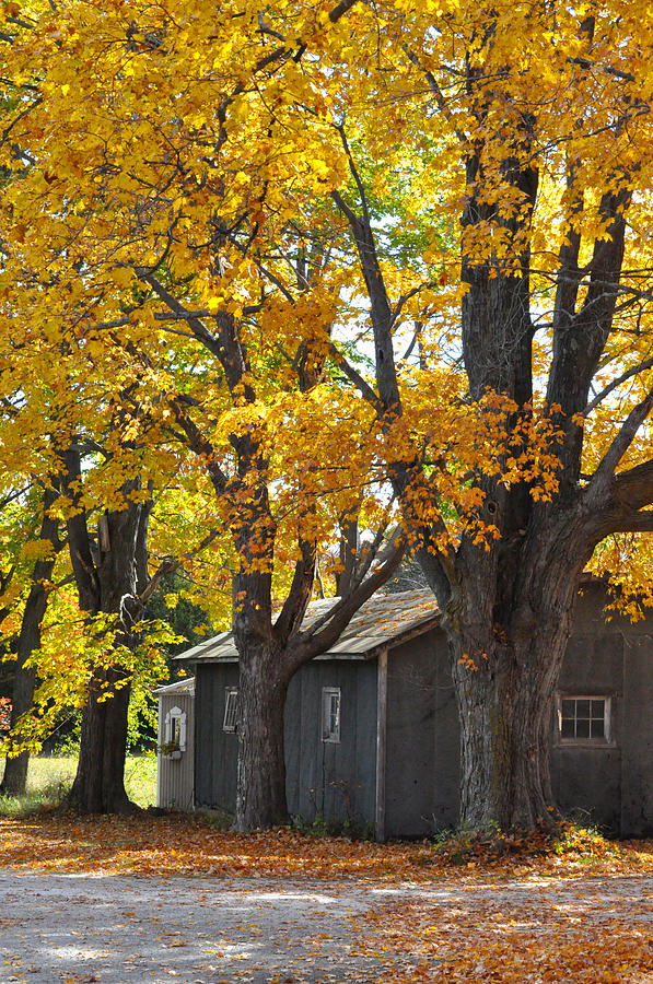 Autumn Photograph - Tar Paper Shack by Tim Nyberg