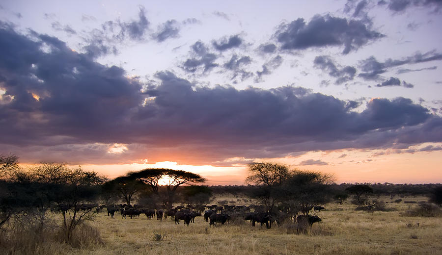 Acacia Photograph - Tarangire Sunset by Adam Romanowicz